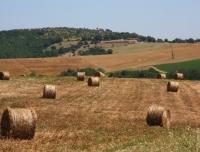 Umbria-campi-fieno